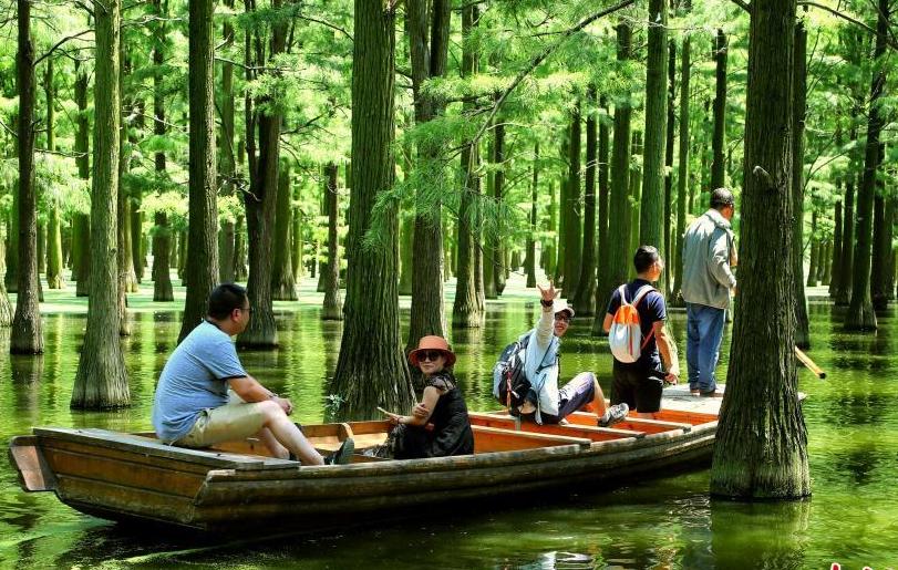武汉新洲水上森林风景如画
