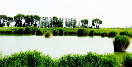 葫芦河新歌——一条牵动布隆吉全域无垃圾专项治理的美丽河流(图)