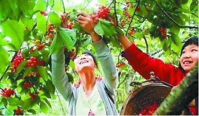 国内外采购商重绿色生态 青睐甘肃农产品