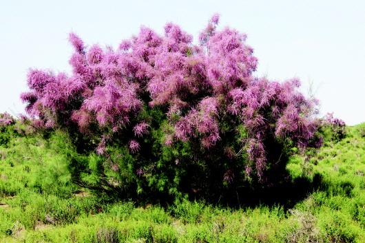 甘肃安西极旱荒漠国家级自然保护区:是荒漠 也是大自然的宝库(图)