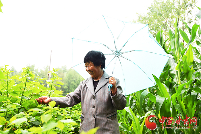 【脱贫攻坚在行动】康乐县马巴村:一次投入20年受益 小树莓托起致富梦(图)