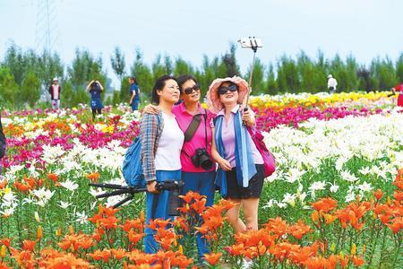 兰州市七里河区魏岭乡狗牙山村盛开的各色鲜花成为一道美丽的风景