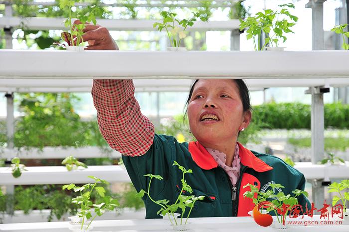 【脱贫攻坚在行动】临夏北塬:东西协作发展现代农业 产业化扶贫走出新路子(图)