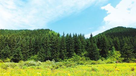 """陇中旱塬的""""绿色飞跃""""——定西市""""三北""""防护林体系工程建设纪实"""