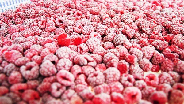 康乐县马巴村:一次投入20年受益 小树莓托起致富梦