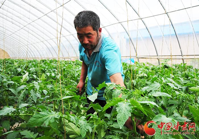 【脱贫攻坚在行动】临夏州永靖县:大力发展现代农业 开启精准扶贫新模式(图)