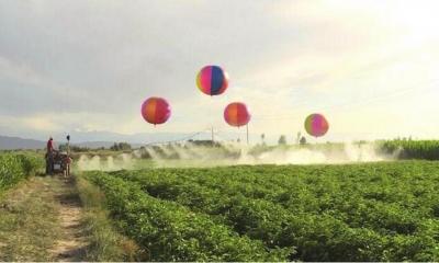 张掖高台县农民首创用气球给农田喷洒农药