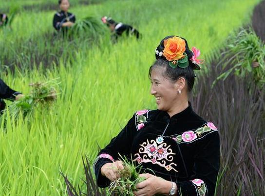 贵州台江:阳芳村民种出五彩生活