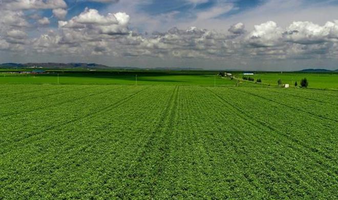 绿染塞北农田 展坝上现代农业新姿