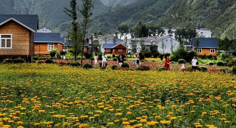陕西洛南:鲜花木屋惹人醉