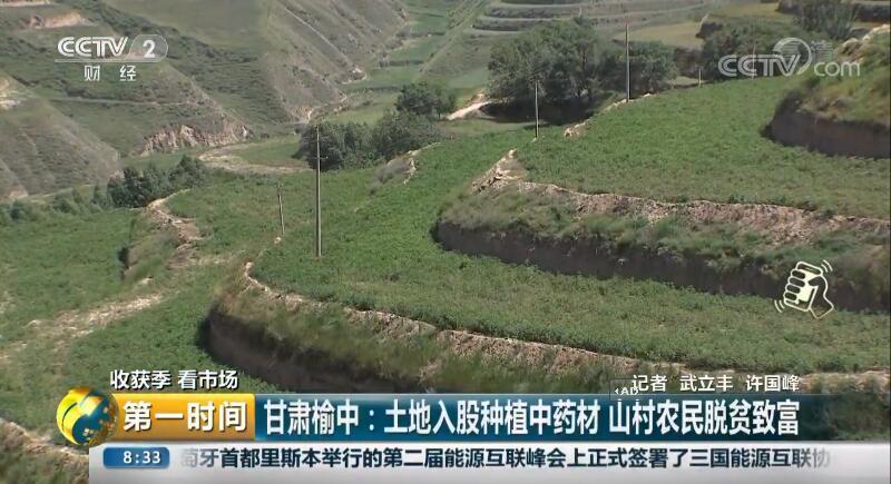 甘肃榆中:土地入股种植中药材 山村农民脱贫致富