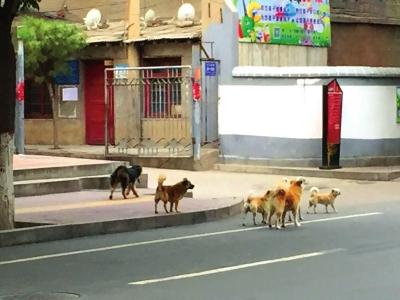"""兰州城关区向不文明养犬行为说""""不"""""""