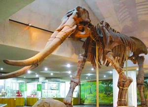 沉睡了250万年的黄河象