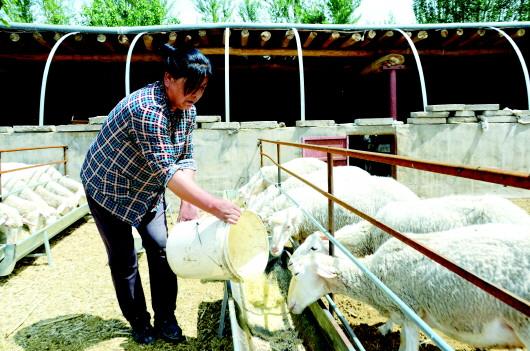 酒泉瓜州县加快畜种改良步伐 不断壮大草畜产业(图)