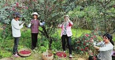 陇南西和县蒿林乡积极引导农民发展花椒种植产业