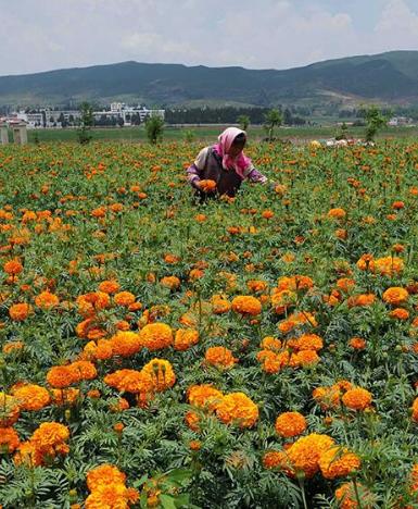 农行甘肃分行今年拟为特色产业发展贷款40亿元