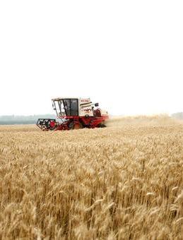 甘肃省麦收进度过八成 机收水平创新高