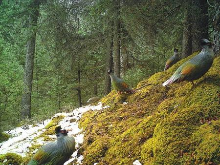 【生态文明 美丽甘肃】 大自然的生灵们—走进大美祁连山系列报道之四
