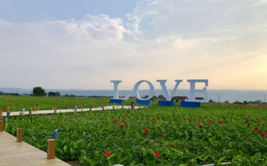甘肃庆城北欧风情薰衣草庄园成陇上别具一格旅游名片