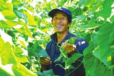 天水武山10万吨优质豆角畅销全国20多省份