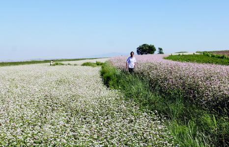 白银草滩镇荞麦长势喜人(图)