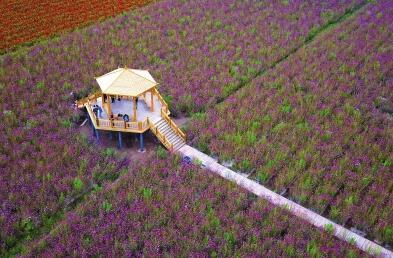 """张掖:乡村旅游让农民享受""""绿色收益"""""""