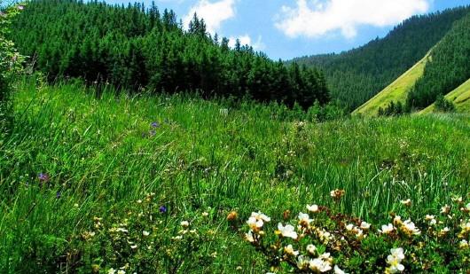 白银景泰寿鹿山自然保护区生态建设见闻