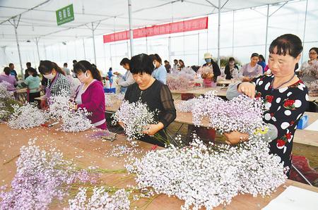 定西渭源县鲜切花试验示范产业园带动农民脱贫致富(图)