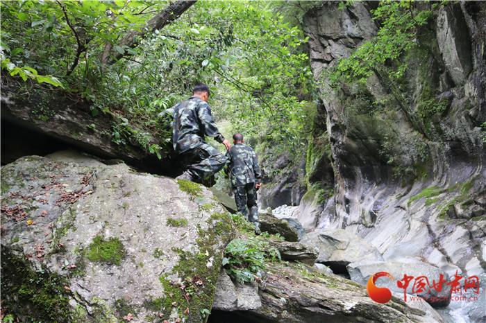 陇原环保世纪行|陇南碧口正水沟里寻熊猫  走访护林员艰辛巡山路(组图)