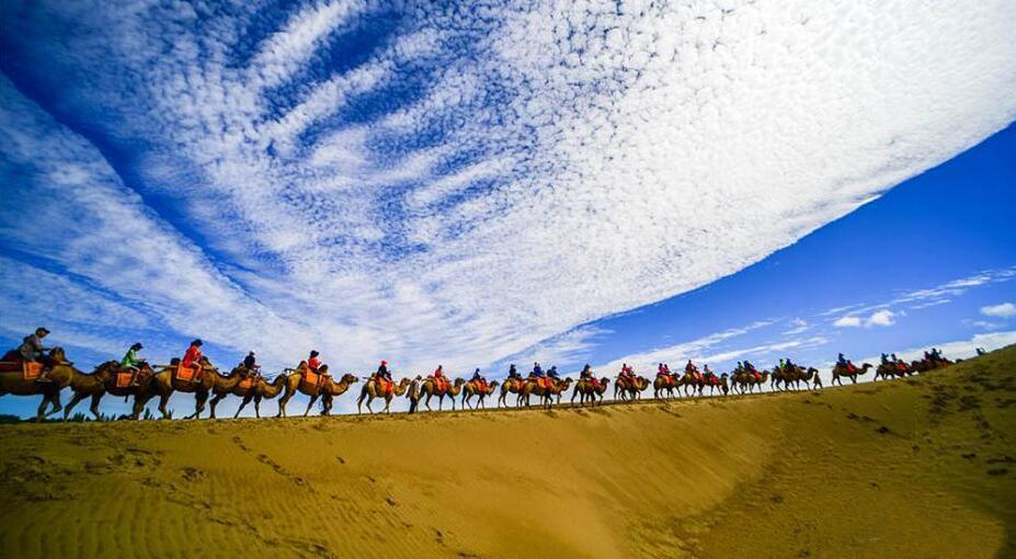 """敦煌鸣沙山千余峰骆驼穿梭""""沙海""""排2公里长龙"""