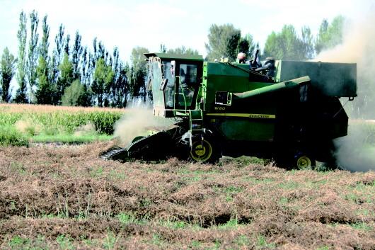 酒泉瓜州县:大型机械在苜蓿地作业(图)