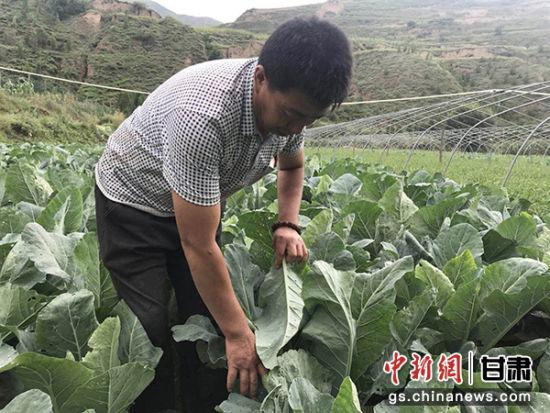 """甘肃漳县农户""""零资金""""种蔬菜""""保价""""销售"""