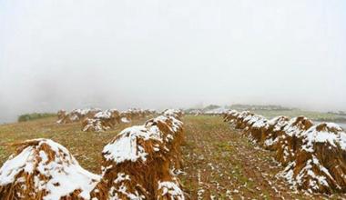 甘肃榆中秋日迎降雪 白雪覆盖金黄麦垛