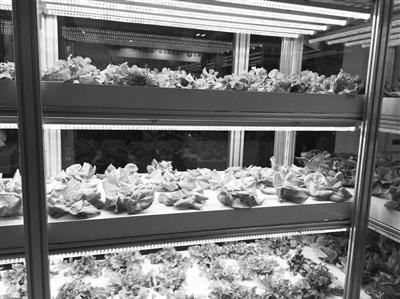 """科博会丨""""鱼菜共生""""等智能农业科技项目亮相科博会"""