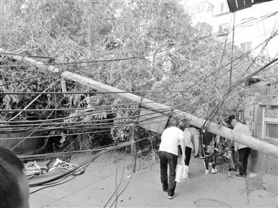 兰州:电杆大树倾倒砸坏围墙 社区供电等部门联手排险
