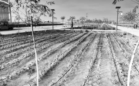 盐碱地上的渔农试验——白银景泰县盐碱地治理模式调查(图)