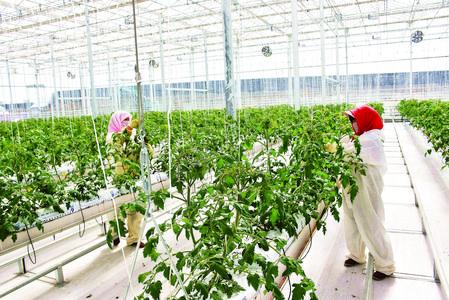 张掖肃州区着力打造戈壁生态农业(图)