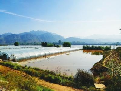 黄河持续高水位运行 皋兰什川大面积农田被淹