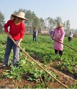 今年甘肃省种植中药材约460万亩
