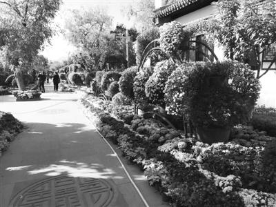 兰州金秋菊展明日在仁寿山启幕