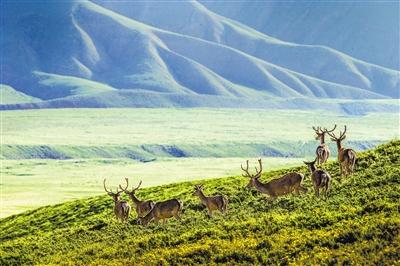 图说甘肃丨祁连山下,鹿鸣呦呦