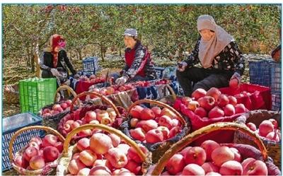 庆阳白马铺镇将苹果产业作为群众脱贫致富主导产业