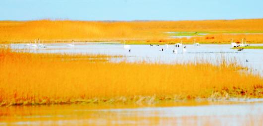 酒泉阿克塞县海子湿地秋景美不胜收