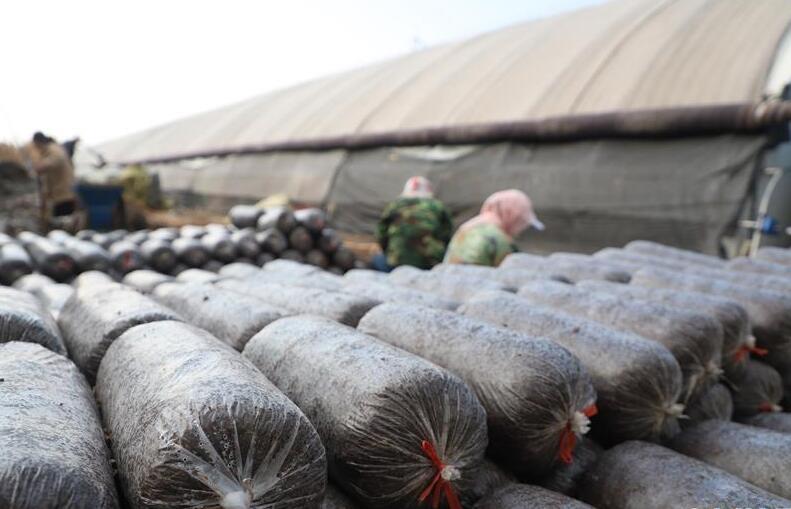 甘肃平凉:特色产业助力群众脱贫致富