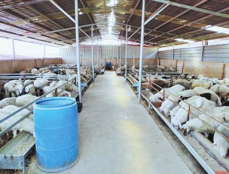 发展牛羊产业 推进脱贫攻坚 ——甘肃省牛羊产业扶贫暨粮改饲现场推进会经验介绍