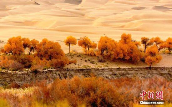 龙虎和阿克塞大漠深处胡杨林春色正浓引人醉