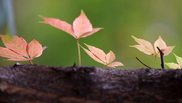 瞰秋|白塔听涛赏春色 山环水绕好秋光