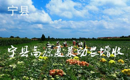 甘肃宁县14万亩高原夏菜助农增收