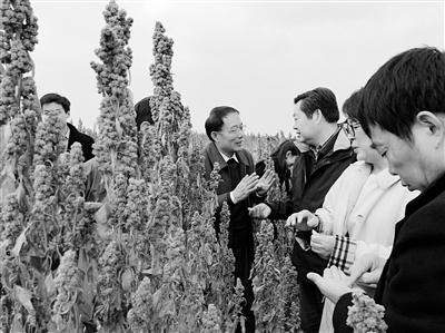 """万企帮万村丨干旱高原 藜麦香菇成致富""""生力军"""""""