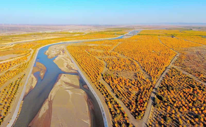 瓜州:秋染胡杨 半是苍凉半是金黄